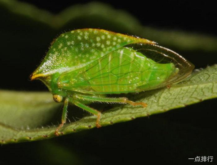 世界上这些奇怪的昆虫动物,保证你没见过