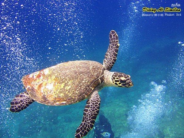 【泰国深潜(潜水)攻略】泰国哪些地方可以潜水、潜水价格、船宿潜水、潜水注意事