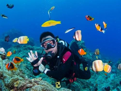 泰国潜水圣地(地方)有哪些