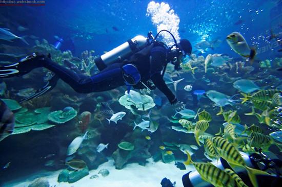 你肯定也会问的泰国潜水常见问题解答