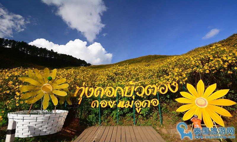 泰国六大赏花景点