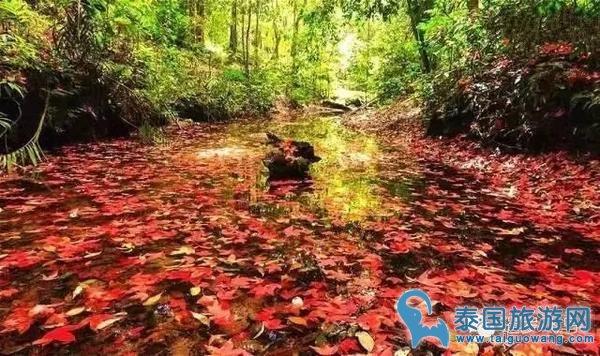 美的像电影场景!泰国黎府最值得去的Phu Kradueng国家公园