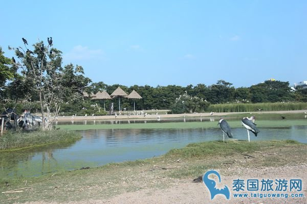 曼谷野生动物园
