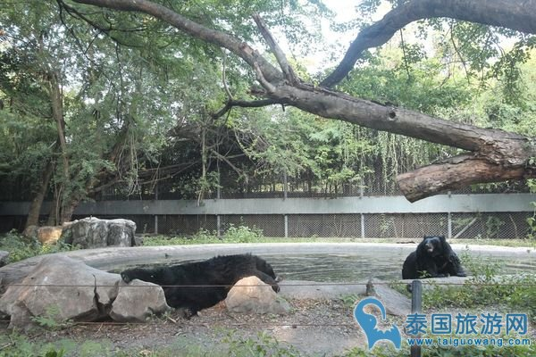 曼谷safari world野生动物园