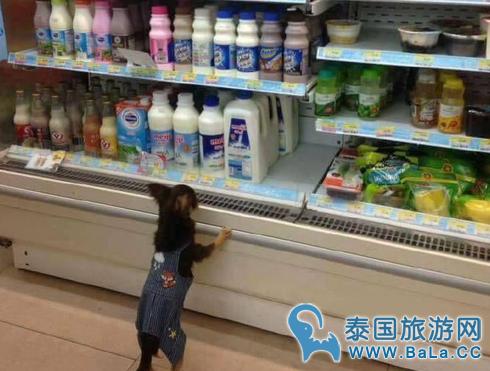 泰国便利店货架现宠物狗引发热议