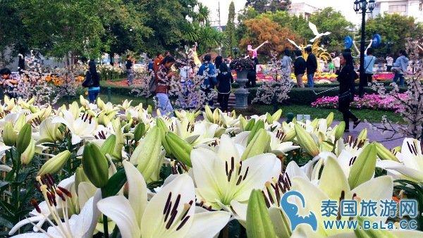 清莱府花卉展