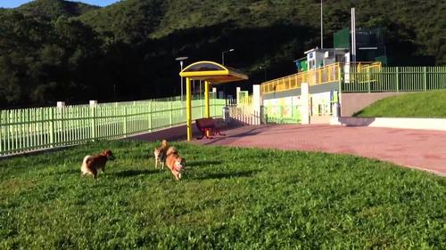 曼谷将兴建兴狗狗公园供市民游客悠闲