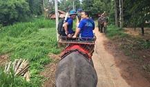 泰国开设流动大象诊所 为大象提供诊所