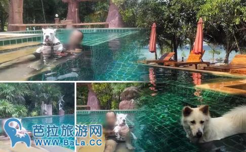 泰国酒店可以带宠物入住吗?真实案例告诉你