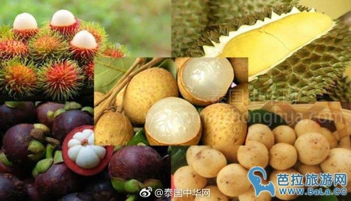 泰国540亿出口水果贸易中40%流入中国果商口袋