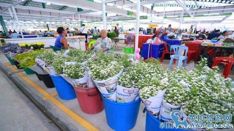 泰国最大鲜花交易市场新河口花卉市场开幕
