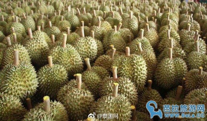 泰国榴莲成新鲜水果出口冠军