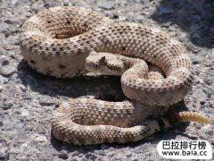 世界上十大最毒的毒蛇排名