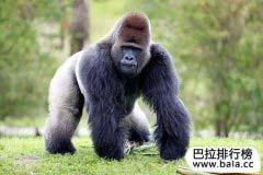 世界十大最致命动物排行榜