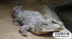 世界上十大危险鳄鱼排行榜