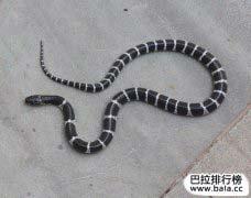 中国十大致命毒蛇排行榜,谁是第一名?