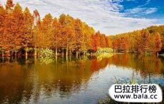 """中国十大珍稀植物 """"水杉""""植物中的大熊猫"""