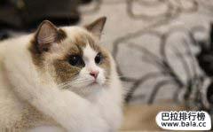 世界十大最美的猫盘点,你最喜欢哪只?