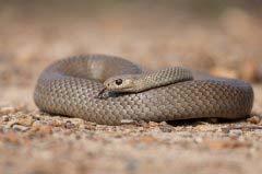 世界上10种最危险的蛇,大班蛇排第二!