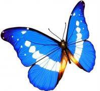 世界最美丽蝴蝶排行榜10强,光明女神蝶属你最美