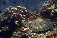 全球最美的十大潜水度假胜地,真是美极了!