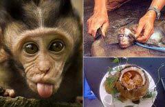 中国10大禁菜,最血腥、残忍的10道菜
