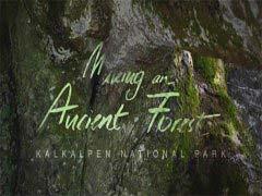 世界最受欢迎的十大自然经典纪录片
