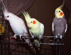 盘点世界十种比较常见的鹦鹉你知道几种?