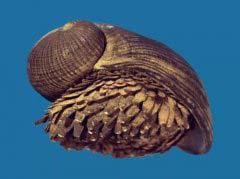 盘点自然界中这10大最奇怪的蜗牛