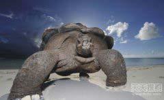 世界上寿命最长的动物排行榜