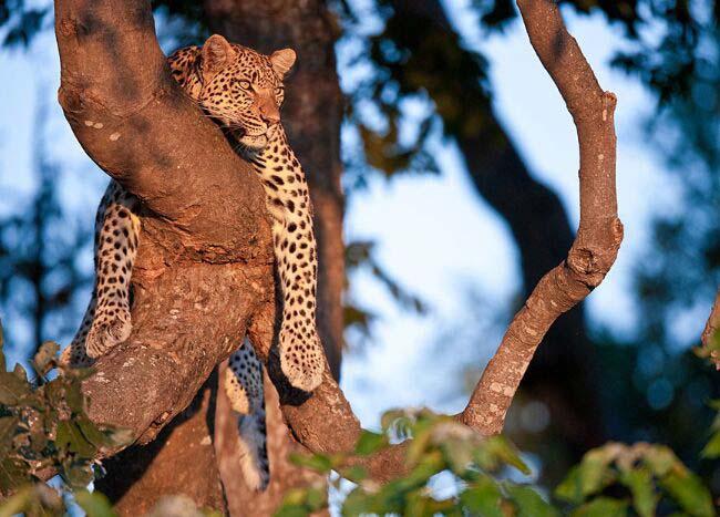 莫雷米野生动物保护区