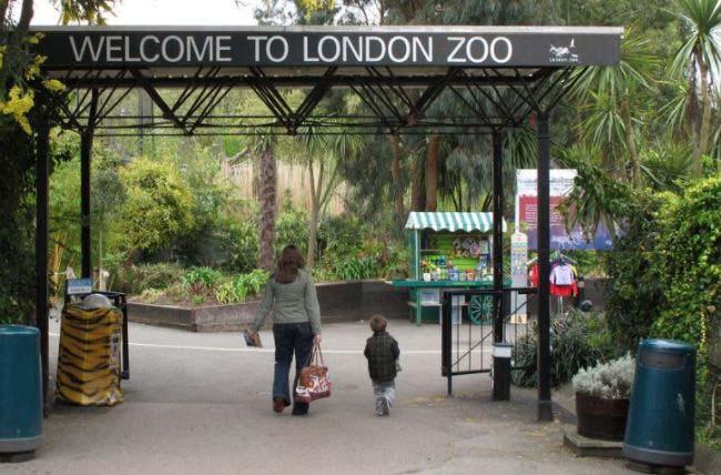 英国伦敦动物园