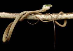 世界上十大最恐怖的毒蛇 非洲腾蛇是最恐怖!