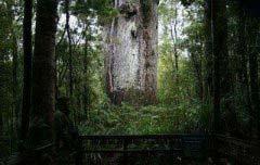 世界上最迷人的十大森林 世界最美森林排行榜