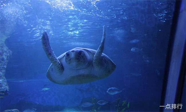 西澳大利亚水族馆