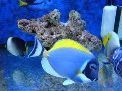 你知道海水鱼能活多久吗 你缸里养的海水鱼寿命