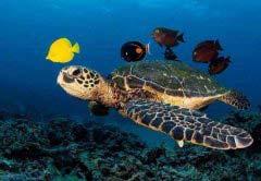 海龟可以活多久海龟最长寿命可以活多少年 可以