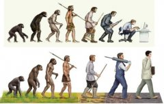 自然界智商最高的10大动物 最聪明动物是人类