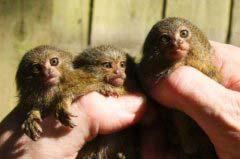 世界上什么动物最小 世界上最小的动物十大排名