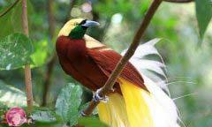 世界最漂亮的鸟是什么鸟 世界上十大最漂亮的鸟