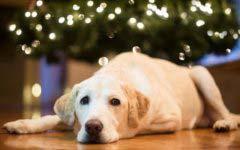 全球十大最受欢迎宠物犬排行