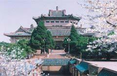 最美的心情就是赏花,中国十大最美赏花胜地