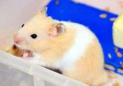 什么鼠最可爱?盘点十大可爱的老鼠