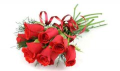 世界上最漂亮的十种花排行 玫瑰花当仁不让