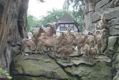 世界十大动物园排名 柏林动物园排第一位