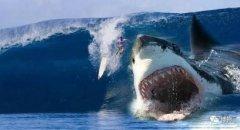 史前十大海洋霸主排名,巨齿鲨曾经雄霸海洋
