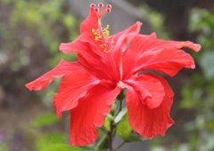 花期最长的花是什么花?盘点10种全年开花的花