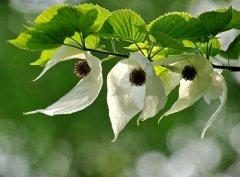 中国十大一级保护植物,个个是植物界的国宝