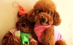 什么狗狗最好养?推荐十种大型和小型犬