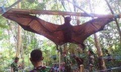 世界上最凶残的蝙蝠是什么 猪脸大蝙蝠爱喝鲜血